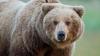 Urșii dintr-o rezervație din Seattle au fost alintați cu somon de localnici