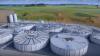 O companie irlandeză va construi prima uzină de biogaz ce va transforma găinațul în energie electrică