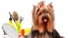 Coafați și aranjați. Peste 25.000 de câini vor defila pe podium la Moscova