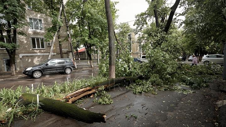 Tragedie în Chișinău! REACȚIA autorităților în cazurile prăbuşirii mai multor arbori, soldate cu victime