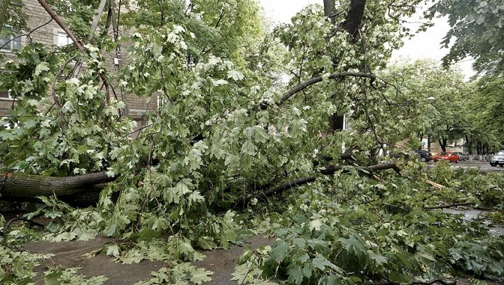 Bulevardul Ștefan cel Mare va fi închis. Mai mulți copaci stau să cadă