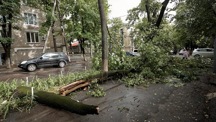 Se prăbuşesc arborii în Capitală: Mai multe maşini au fost avariate