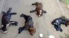 CRUZIME fără margini! Patru cățeluși, LIPIŢI DE ASFALT CU SMOALĂ FIERBINTE (FOTO)