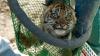 TRAGIC! Zeci de animale au MURIT DE FOAME în Venezuela