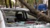 GHINIONUL unui şofer din Capitală! O salcie de aproape zece metri s-a prăbuşit peste automobilul său