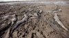 TRAGIC! Mii de aligatori au MURIT în urma secetei cumplite din America de Sud