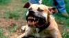 Caz Şocant! Câinii au sfâșiat un copil SUB PRIVIRILE DISPERATE ALE MAMEI