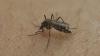 ALERTĂ! Țânțarul-tigru, cel care transmite virusul Zika și Febra Galbenă, a apărut în Constanța