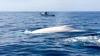 SPECTACOL INEDIT OFERIT DE BALENE. Pasagerii unui vas de observaţie au rămas uimiți