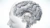 Astăzi este Ziua Mondială a Creierului. Ce importanţă are sănătatea şi prevenirea  afecțiunilor neurologice