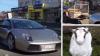 VIRAL PE INTERNET! Un australian plimbă ovine într-un Lamborghini (VIDEO)