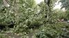 Copaci doborâți și morminte surpate. Ploile de ieri au făcut ravagii în mai multe localități