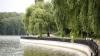 Seri mai frumoase la Valea Morilor. Ce fac doi tineri pentru a încânta trecătorii (VIDEO)