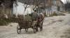 Accident ÎNFIORĂTOR la Criuleni. O căruță în care se afla o mamă cu doi copii, SPULBERATĂ pe șosea (VIDEO)