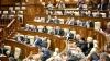 Votat în Parlament! Veste importantă pentru întreprinderile mici şi mijlocii
