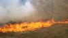 Incendiile de vegetaţie din California se extind. Flăcările au ajuns până în apropierea Parcului Naţional Yosemite