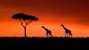 HOROSCOP AFRICAN: Îți spune exact care e personalitatea ta