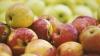 VESTE BUNĂ! 43 de companii din Moldova au primit dreptul de a exporta fructe pe piaţa rusă