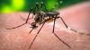 ALERTĂ! Virusul Zika a fost confirmat în România