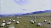 INEDIT! Insulele Feroe văzute prin ochii oilor (VIDEO)