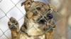 ÎNDURĂ FOAME! Zeci de câini adunaţi de pe străzile oraşului Bălţi, întreținuți în condiţii groaznice