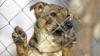 RĂMÂI FĂRĂ CUVINTE. Reacţia unui câine după ce o femeie i-a dat să bea apă (VIDEO IMPRESIONANT)