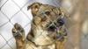 Proiect de lege: CRUZIMEA faţă de animale va fi pedepsită DUR