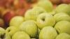 AFACERE INEDITĂ la Orhei. Milionarul care investeşte pasiune în fructele pe care le cultivă