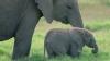 NO COMMENT! Ce face un pui de elefant după ce mama lui a fost ucisă (VIDEO)