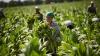 MILIOANE DE DOLARI pentru susţinerea agricultorilor şi femeilor de afaceri! Cine va beneficia de bani