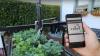 #LIKEPUBLIKA. Câţiva tineri au inventat tehnologia care ar putea REVOLUŢIONA agricultura (VIDEO)