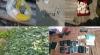 Verificări minuţioase în sudul ţării. Sute de plante de mac și cannabis, depistate de poliţişti (VIDEO)