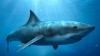 Top 5 mituri false despre rechini. Care este cea mai mare ameninţare a creaturilor periculoase