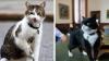 CONFLICT felin acut în Guvernul britanic. Larry şi Palmerston s-au bătut (FOTO)