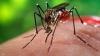 Înţepăturile de ţânţari pot cauza probleme grave de sănătate. Tot mai mulţi copii, internaţi în spital