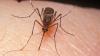 ALARMANT! Oameni de știință din Brazilia au găsit urme ale virusului Zika la țânțari comuni