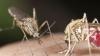 ALERTĂ în România! Încă un caz de infectare cu virusul Zika