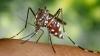 Campionatul de vânătoare de țânțari. Tânărul care a stabilit un nou record