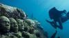 IMPRESIONANT! Comorile de sub apele mării despre care nici nu bănuiai (VIDEO)
