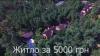 Cum arată PALATUL DE MILIOANE, închiriat cu 5.000 de hrivne, în care trăieşte un deputat (VIDEO)