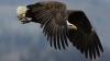 IMAGINI ŞOCANTE! Un vultur încearcă să zboare cu un copil în gheare. Martorii, ÎNGROZIŢI