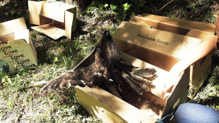 Mai multe păsări şi broaşte confiscate de la comercianţi ilegali au fost eliberate în pădure (FOTO/VIDEO)