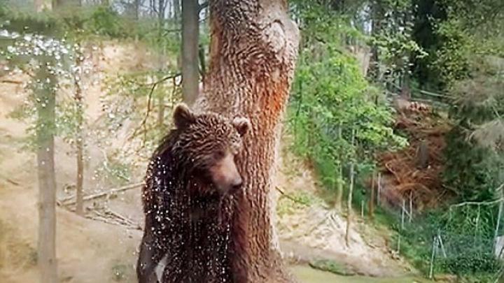 NO COMMENT: Un urs, ÎMPUŞCAT în timp ce încerca să scape din noua sa grădină zoologică