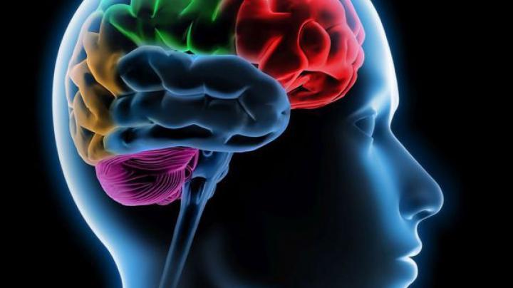 Cum se regenerează memoria cu celule stem