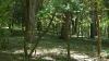 CAZ FĂRĂ PRECEDENT! Ce au descoperit angajaţii de la Ministerul Mediului într-un contract de arendă a unei păduri