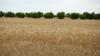 Prognozele BNM: Anul agricol bun va influenţa pozitiv preţurile