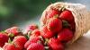 Căpșuni și cereale moldovenești pe piața europeană. Moldova își diversifică gama de produse exportate