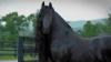 Cum arată Frederik The Great, cel mai frumos cal din lume (FOTO)