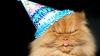 Ziua internațională a pisicii, sărbătorită în toată lumea