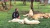 Iubirea unui tigru pentru îngrijitorul său: Felina l-a salvat de atacul unui leopard (VIDEO)